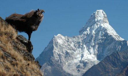 Ama dablam Expedition Trip