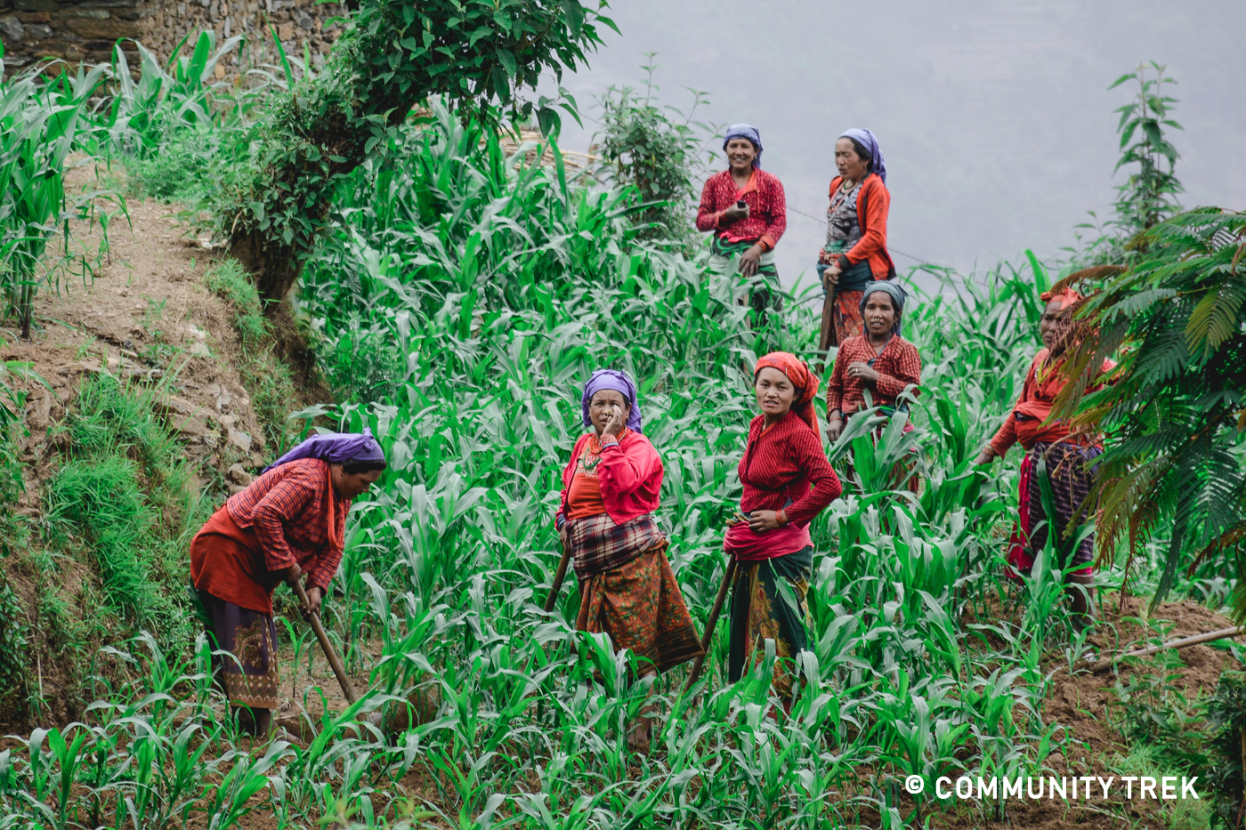 Tamang women working in their farm.